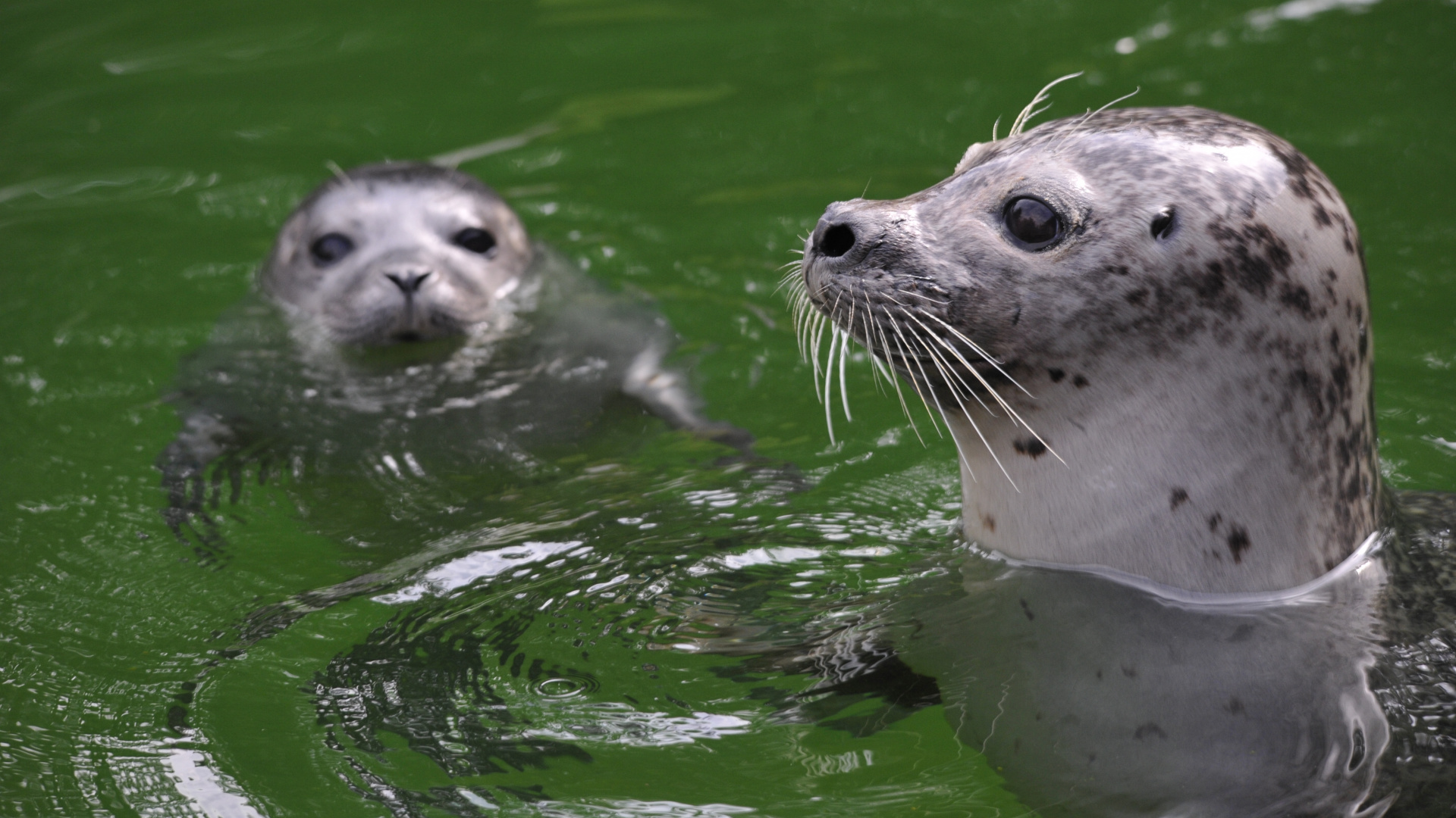 Tierpark Bern - Bern Welcome